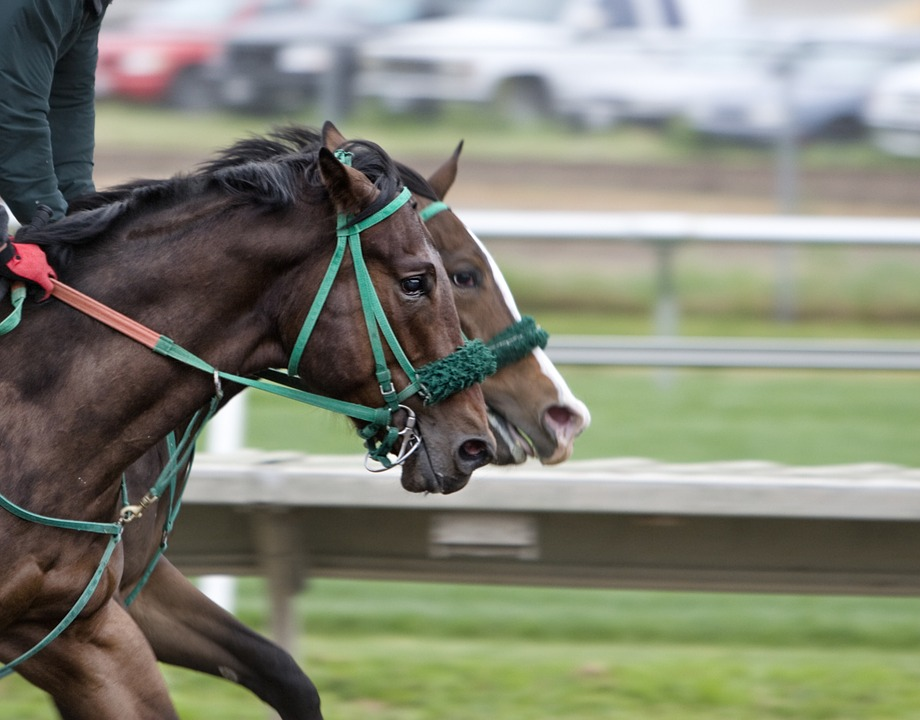 horses-riding-work-racecourse-image-430439_960_720